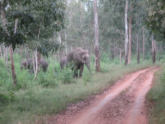 This elephant that charged at us!