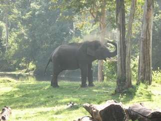 We also spotted elephant on the way back
