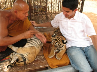 Petting tiger cubs